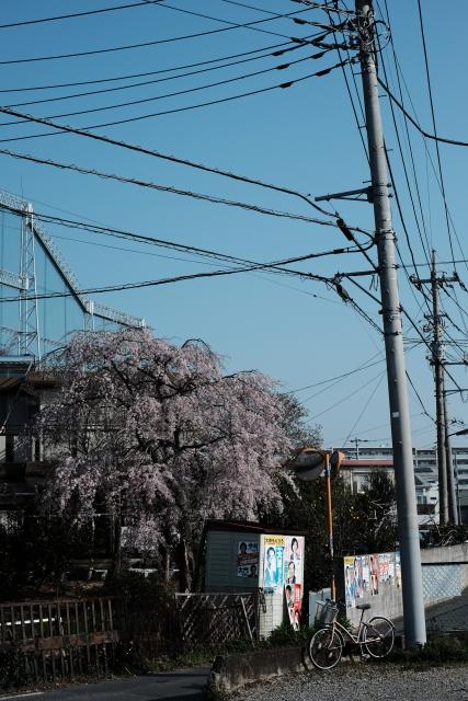 街角と枝垂れ桜