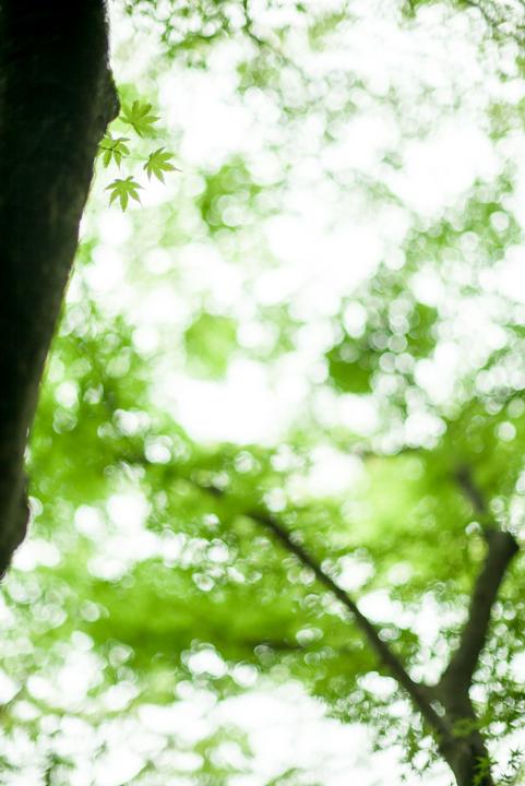 Leica M (Typ240) + Voigtlander NOKTON 50mm F1.1