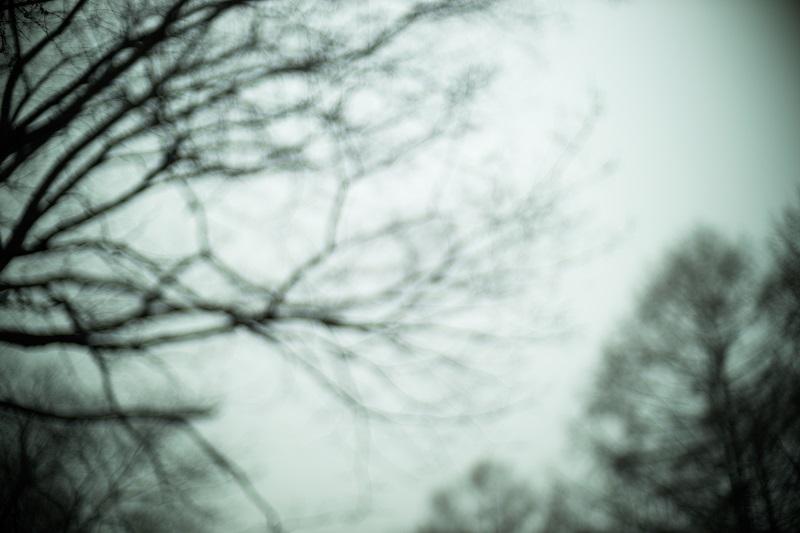 Canon EOS R + NOCTILUX-M 50mm F1.0