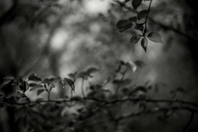 Leica M (Typ240) + SUMMILUX-M 50mm F1.4 (2nd)